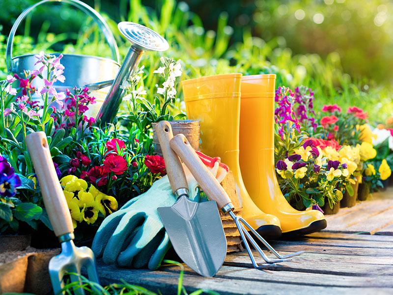 LSU Master Gardener Series