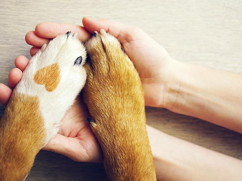 Teens Give: Livingston Parish Animal Shelter